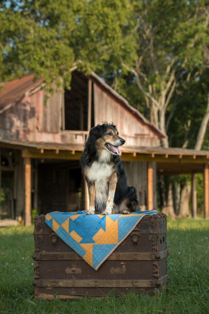 Dog and 100 year old Barn